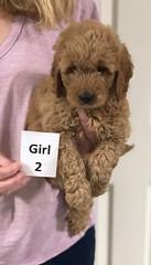 Sabrina Girl 2 pic 4 7-5