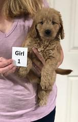 Sabrina Girl 1 pic 4 7-5