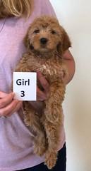 Shyanne Girl 3 pic 3 7-5