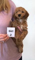 Shyanne Girl 2 pic 2 7-5
