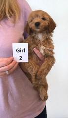 Shyanne Girl 2 pic 3 7-5