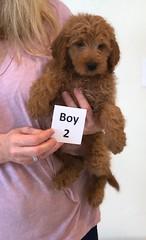 Shyanne Boy 2 7-5