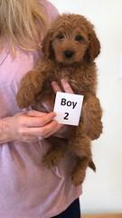 Shyanne Boy 2 pic 2 7-5