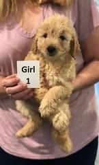 Ella Girl 1 pic 2 7-5