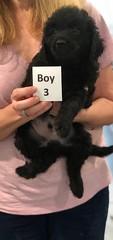 Ella Boy 3 7-5