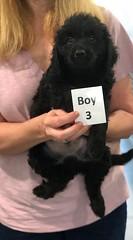 Ella Boy 3 pic 3 7-5