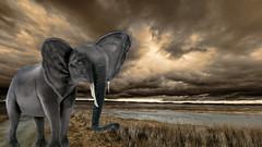 Marshfoot the Elephant