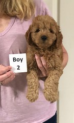 Sabrina Boy 2 7-5