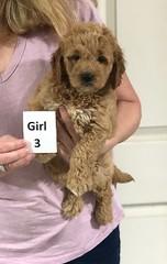 Sabrina Girl 3 7-5
