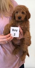 Shyanne Boy 2 pic 3 7-5