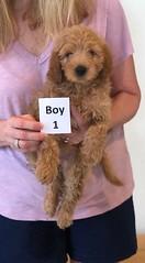 Shyanne Boy 1 pic 3 7-5