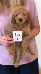 Shyanne Boy 1 pic 4 7-5