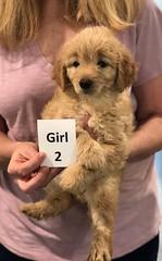 Ella Girl 2 7-5