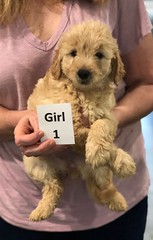 Ella Girl 1 pic 4 7-5
