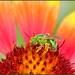 Happy Green Bee