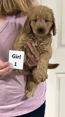 Sabrina Girl 1 7-5