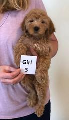 Shyanne Girl 3 pic 2 7-5
