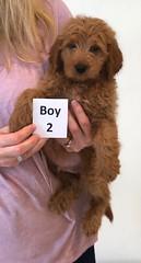 Shyanne Boy 2 pic 4 7-5