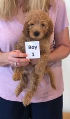 Shyanne Boy 1 7-5