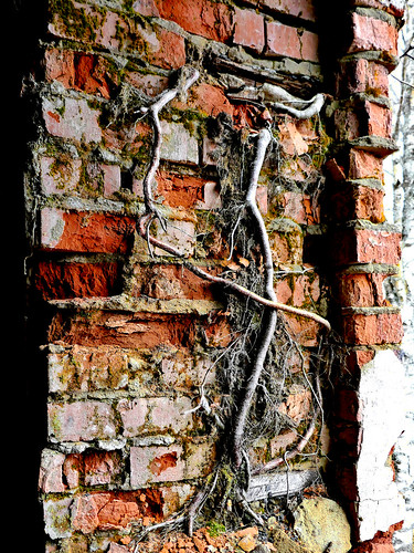Veins this wall ©  Sergei F