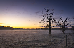 Photo of Frosty sunrise