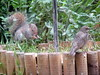 Squirrel & starling