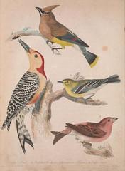 Anglų lietuvių žodynas. Žodis cedarbird reiškia <li>Cedarbird</li> lietuviškai.
