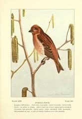 Anglų lietuvių žodynas. Žodis carpodacus purpureus reiškia <li>carpodacus purpureus</li> lietuviškai.