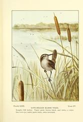 Anglų lietuvių žodynas. Žodis long-billed marsh wren reiškia ilgai-mokami marsh wren lietuviškai.