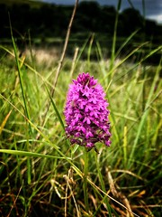 Photo of Wild Orchid