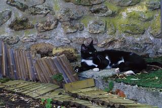chat au jardin17