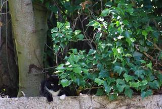 chat au jardin16