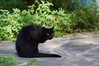 chat au jardin15