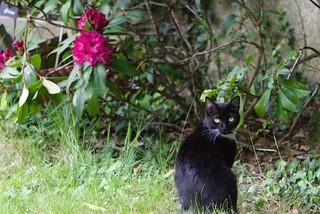 chat au jardin12