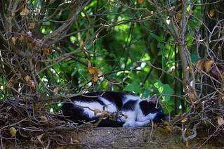 chat au jardin-19