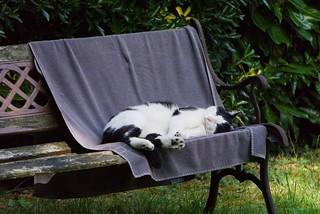 chat au jardin18