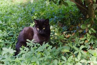 chat au jardin14