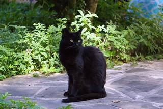 chat au jardin13
