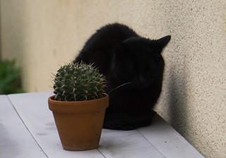 chat au jardin10