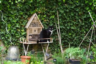 chat au jardin9