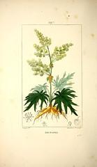 Anglų lietuvių žodynas. Žodis rheum palmatum reiškia <li>rheum palmatum</li> lietuviškai.