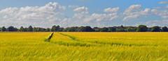 Photo of A gentle breeze, Yattendon, Berkshire, England