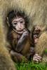 200708-Trentham_Monkey_Forest-0144