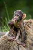 200708-Trentham_Monkey_Forest-0235