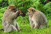 200708-Trentham_Monkey_Forest-0159