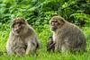 200708-Trentham_Monkey_Forest-0154
