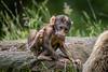200708-Trentham_Monkey_Forest-0225