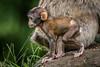 200708-Trentham_Monkey_Forest-0204