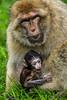200708-Trentham_Monkey_Forest-0134
