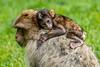 200708-Trentham_Monkey_Forest-0058